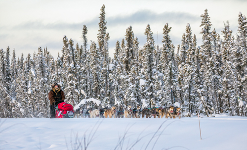 Peter Reuter and his team race on the first day of the Copper Basin 300 sled dog race Saturday, Jan. 14 in Alaska.  (Photo courtesy of Julien Schroder)