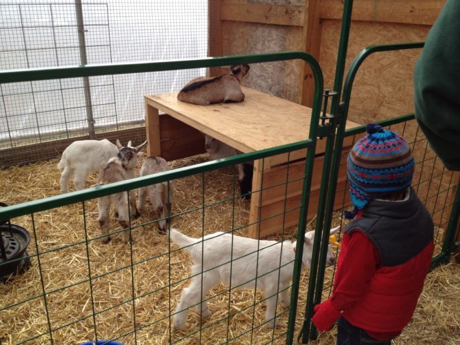 Kids of all ages enjoy Asgaard Farm's Kidding Day (Photo provided — Diane Chase)