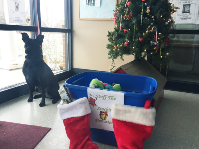 PHOTO BY SETH WEBER Pepper, a dog waiting for adoption, sits next to donations for Stuff the Stockings Saturday at the Humane Society of Seneca County.