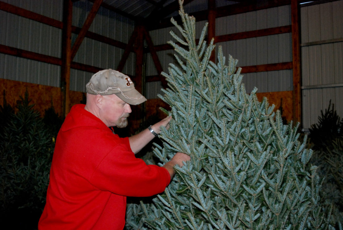 Christmas tree sales begin, grower offers tips | News, Sports ...