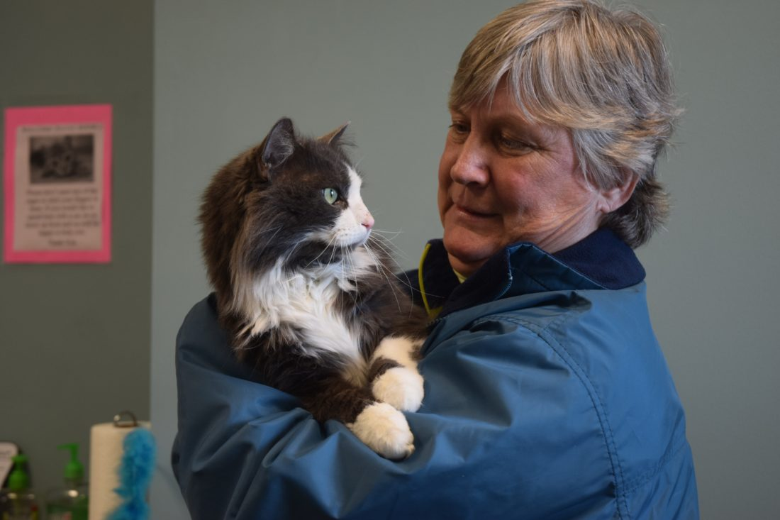 "Haley Gustafson | Daily Press Delta Animal Shelter Volunteer Carol Schiltz spends some quality time with adoptable shelter cat ""Quinn"" Wednesday afternoon. Over 2016, the shelter took in 1,135 animals and adopted out and saved 1,096."