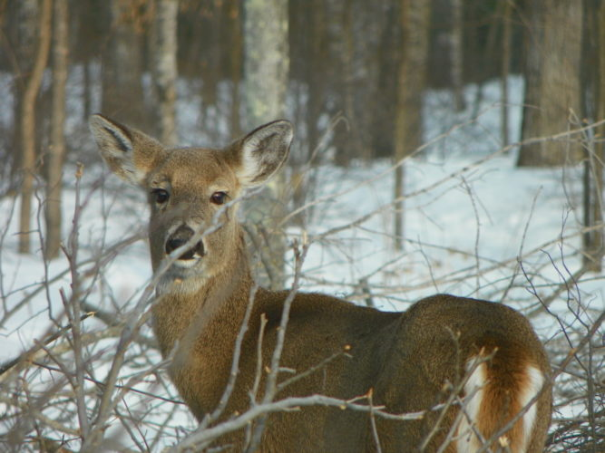 """Courtesy photo Pictured above is the old doe """"Donuts."""""""
