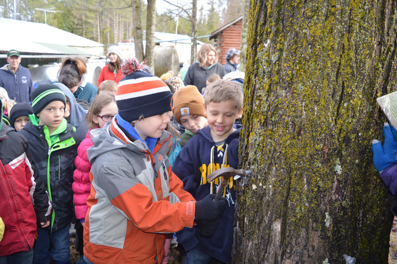 Jordan Beck | Daily Press Bark River-Harris Elementary School second-graders helped to tap maple trees during a field trip they took to maple syrup producer Olson Bros. Sugar Bush in Bark River Friday. Students were also able to sample maple syrup products and learn about how maple syrup is made during this field trip.