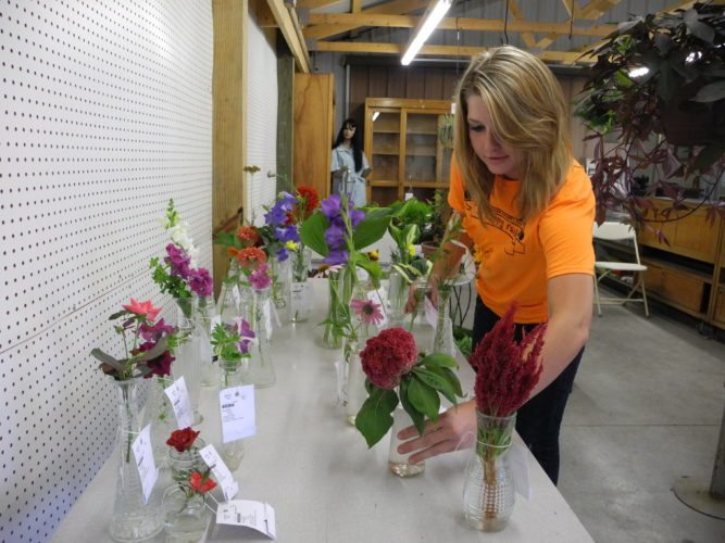 CHECKS ENTRIES —  Sarah Rugg, a staff member of the 7 & 8th departments at the Jefferson County Fair, checked one of the flower entries.  -- Esther McCoy