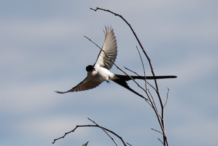 Andrew Simon Photo