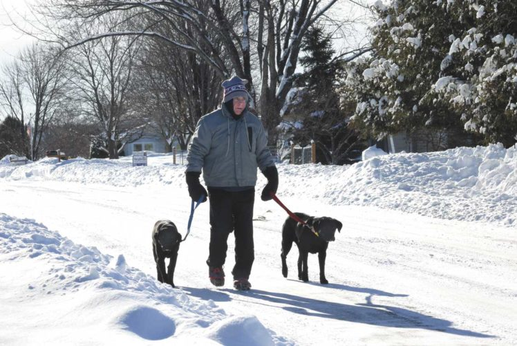 Theresa Proudfit/Daily News Photo Marvin Lundin walks his two black Labs, Jenny, left and Jodie, right, up Cox Street in Quinnesec.