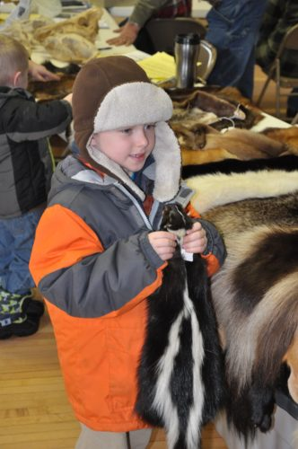 "Fur identification is always popular at the U.P. Trappers Workshop in Hermansville. Last year, Dominick LeClair held a tanned skunk hide, probably wondering, ""Am I really touching a skunk?"""