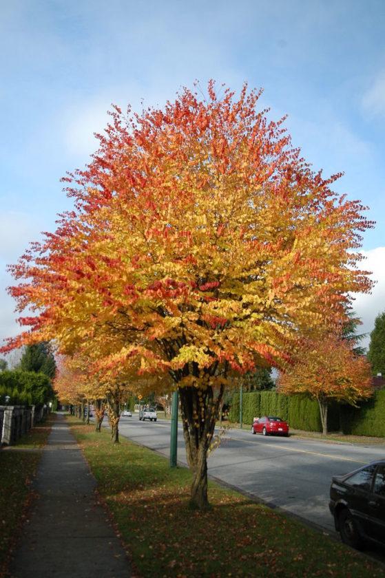 Iron Mountain Tree Board Offers Katsura News Sports