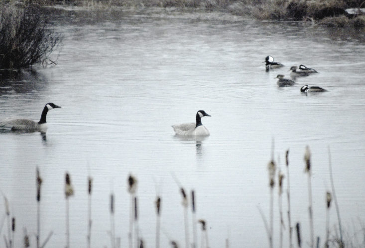 It's not too early for swimming at Six Mile Creek. Betsy Bloom Photo