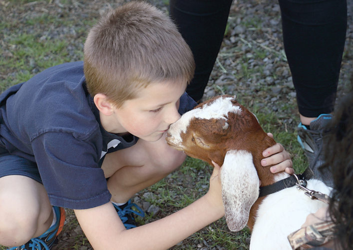 Sentinel photo by MATT STRICKER Sacred Heart School second grader Teagan Pisko gets a smooch from a one-month-old boer goat Friday while on a field trip to the Dave Glick Family Farm in Lewistown.