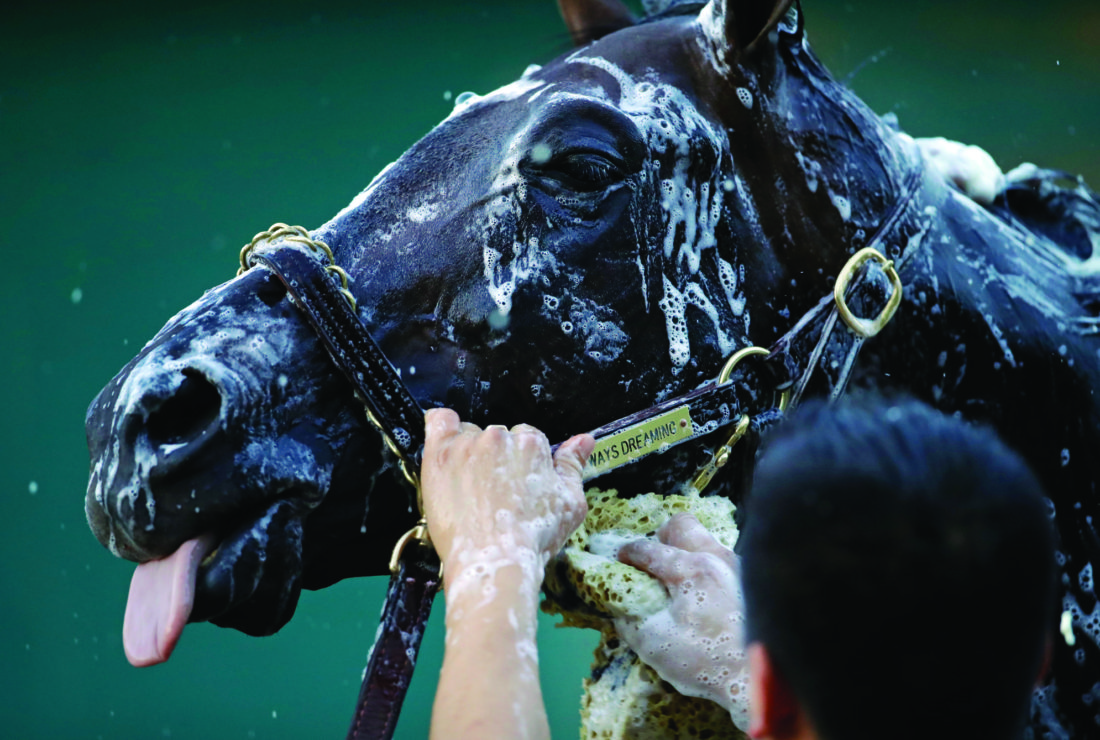 Kentucky Derby winner Always Dreaming is washed after a workout at Pimlico Race Course in Baltimore, Thursday, May 18, 2017. The Preakness Stakes horse race is scheduled to take place May 20. (AP Photo/Patrick Semansky)