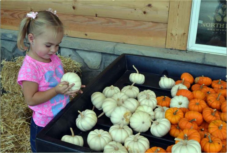PEYTON NEELY   The Marietta Times ABOVE: Ivy Fulks, 3, of Fleming, picks mini pumpkins at Hensler's Town and Market in Marietta.