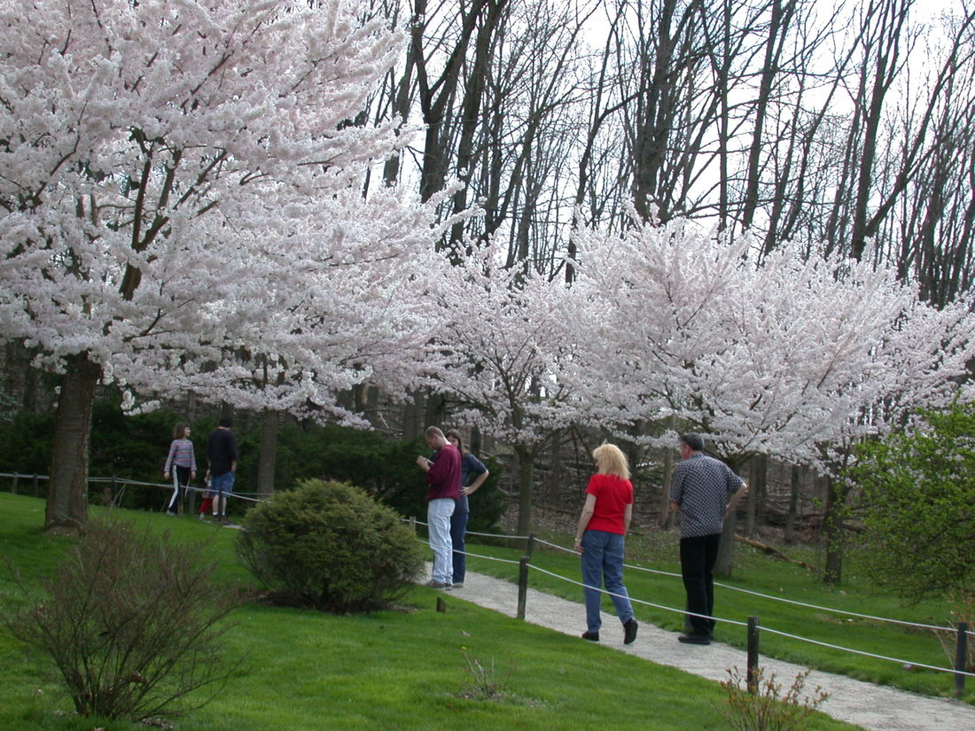 Photo submitted by Luke Messinger Flowering cherry blossom trees in the Japanese Garden at Dawes Arboretum in Columbus draw crowds of all ages in spring.