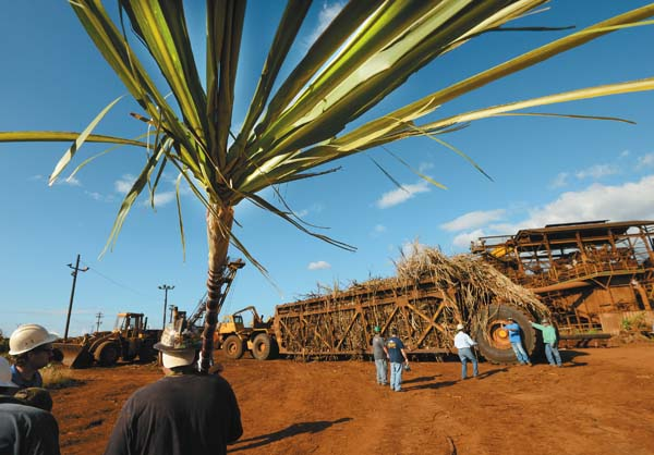 Outside the factory, where a sickly sweet scent hangs thick in the air, cane haulers wait their turn to dump out the first harvest of 2016.  The Maui News / MATTHEW THAYER photo
