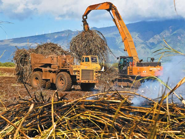 A Hawaiian Commercial & Sugar Co. grab operator loads a Tournahauler with harvested sugar cane. The massive vehicles are able to transport loads of 60 tons.  The Maui News / MATTHEW THAYER photo