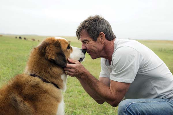 "Dennis Quaid with a dog (voiced by Josh Gad) star in ""A Dog's Purpose."" Paramount Pictures photo via AP"