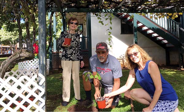Doris Christenson (from left), Lahaina Restoration Foundation Head Groundskeeper Clifford Corniel and Pam McCabe plant new grapevines under the 50-year old arbor at Baldwin Home Museum in Lahaina.   KAREE CARLUCCI photo