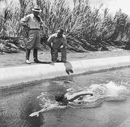 Maui's Olympic champion Bill Smith trains in a Puunene irrigation ditch under the watchful eye of legendary coach Soichi Sakamoto (hat) and another coach.  Hawaii Swim Club photo