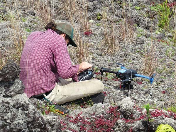 Timo Sullivan of the Big Island Invasive Species Committee prepares a drone for flight. BIISC uses drones regularly to help field crews do what they do best: remove invasive plants. -- Timo Sullivan / Big Island Invasive Species Committee photo