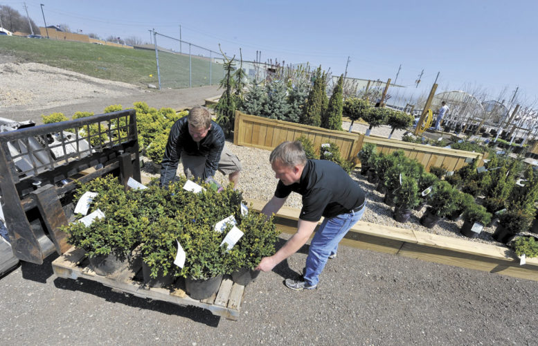 -Messenger photo by Hans Madsen  Smitty's Greenhouse co-owner Jon Baedke, right, along with manager Rick Lamoureux work on stocking the newly enlarged tree and shrubbery area at the garden center.