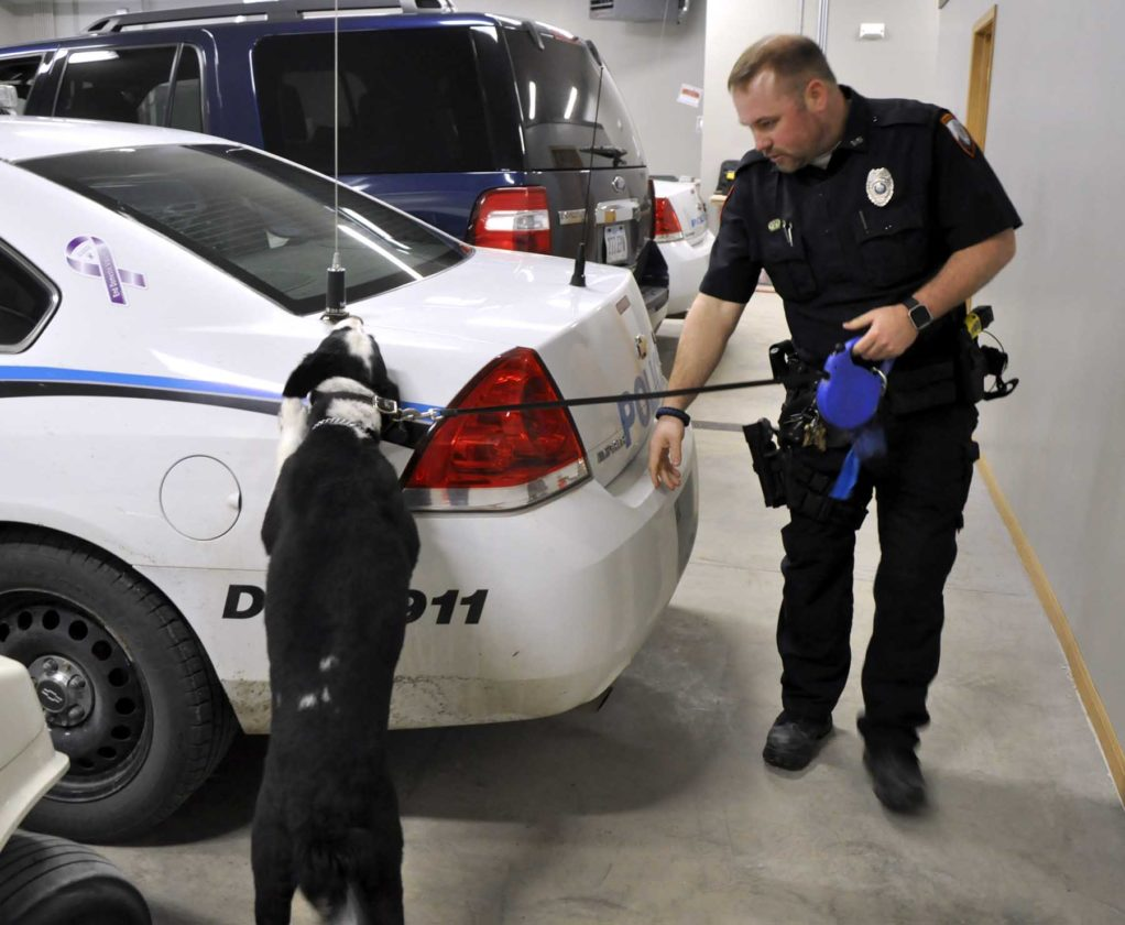 -Messenger photo by Peter Kaspari  Algona Police Officer and K-9 Handler Grant Smith demonstrates how one of the department's dogs, Jet, looks for bombs in a vehicle. The department is raising money to purchase another dog in anticipation of Jet's upcoming retirement.