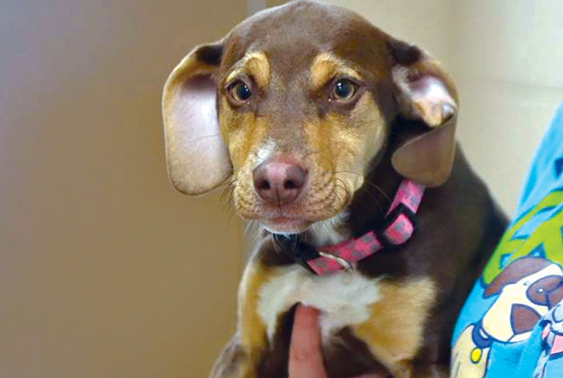Former shelter dog found child lying in a ditch