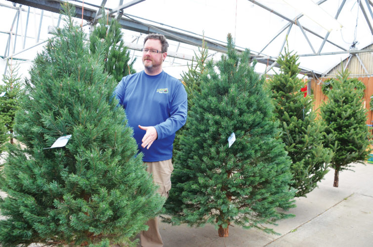 Eloise Ogden/MDN  James Lowe, manager of Lowe's Floral in Minot, explains how to take care of a fresh Christmas tree. One of the main things is a fresh or live Christmas tree requires plenty of water.