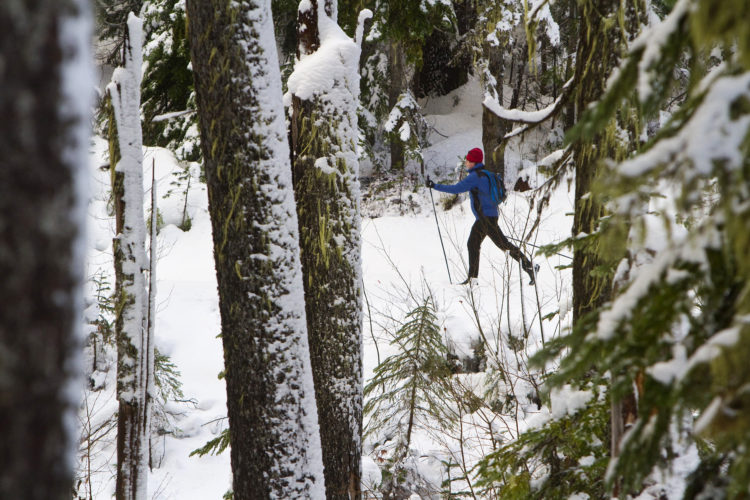 In this Dec. 9, 2012, file photo, an unidentified skier heads through the woods at Teacup Lake nordic cross country ski area on Mount Hood near Hood River, Ore. The opportunity to experience the region's dramatic landscapes dusted in winter white, often with no other people around, more than makes up for any minor discomforts while winter camping. (Mike Siegel/The Seattle Times via AP, File)