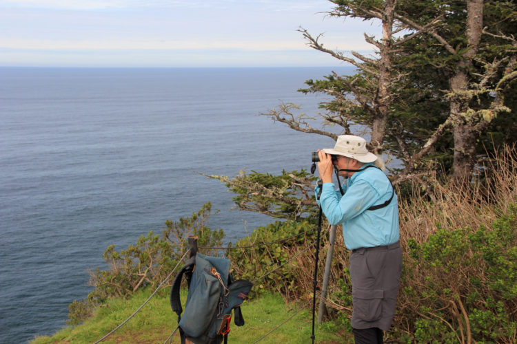 In this March 20, 2015, file photo, Jim Border, who volunteers to help members of the public spot whales during Spoken Here Whale Watching Week on the Oregon Coast, scans the horizon for signs of spouts from the tip of Cape Lookout, near Tillamook, Ore. (Zach Urness/Statesman-Journal via AP, File)