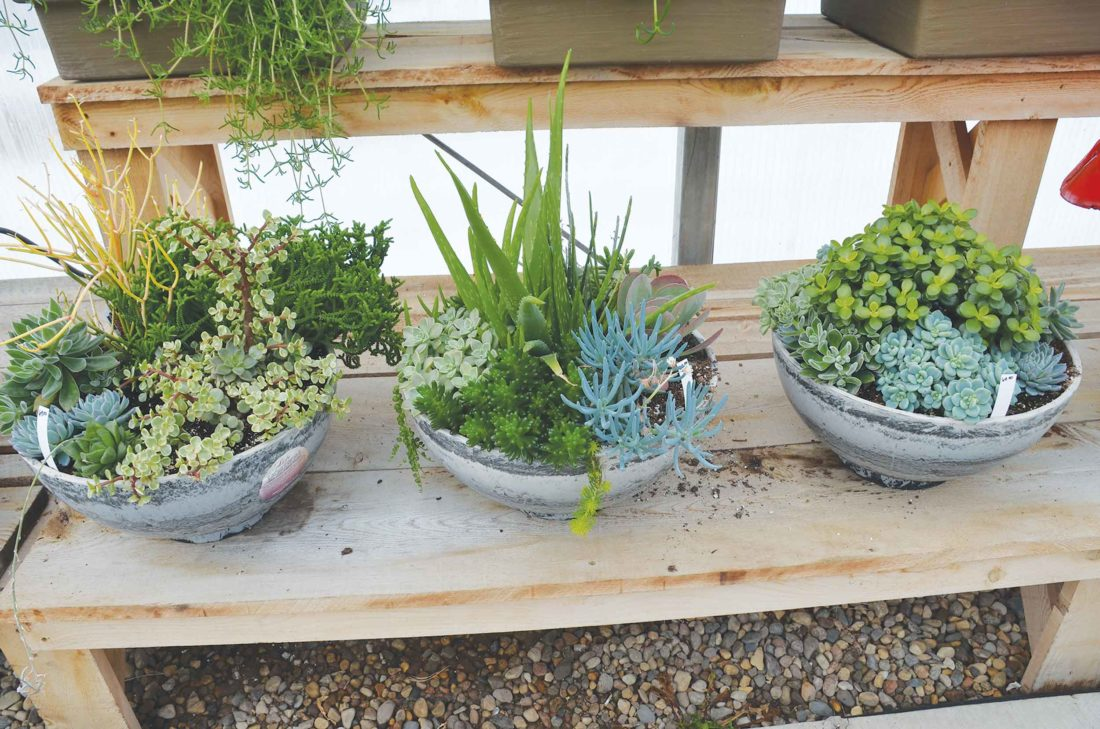 Eloise Ogden/MDN  Succulents are easy to grow and need little care. They can be indoors or outdoors and planted in containers, as wall hangings and even as chair decorations.