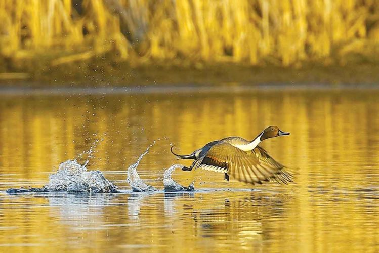 "Submitted Photo ""Golden Pond,"" by Minot photographer Steve Silseth, was awarded first place in the North Central Camera Club Club Council."