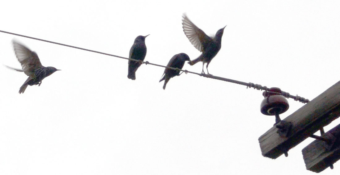 Birds On A Wire - Mobil6000