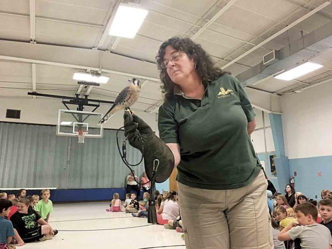 Photo by Michael Erb Wendy Perrone, executive director of the Three Rivers Avian Center in Brooks, W.Va., displays an American kestrel Friday during a presentation on birds of prey at Worthington Elementary School.