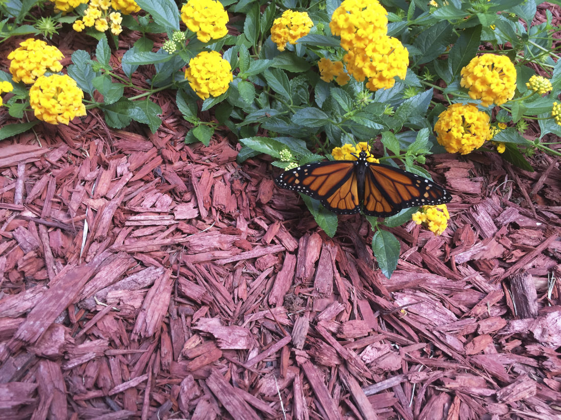 how to build a butterfly garden in new tecumseth