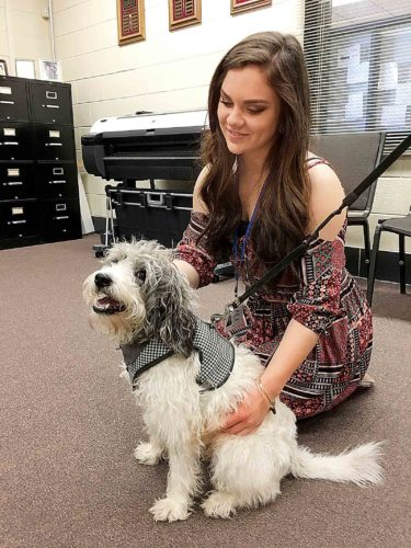 Seventeen-year-old Shay Linder, a co-op for the Administrative Support Class at the Wood County Technical Center, says hello to Gatsby, a seven-year-old beagle-poodle mix who last week was approved by the Wood County Board of Education as a therapy dog for the center. (Photo by Michael Erb)