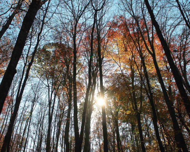 """Photo Provided """"Forest"""" by Kendra Duncan is among the 29 images selected for the sixth annual Federal Hocking High School 8-by-10 Photo Exhibit at ARTS/West in Athens. The show runs Feb. 27 through March 25."""