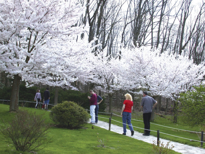 Photo provided by Luke Messinger  Flowering cherry blossom trees in the Japanese Garden at Dawes Arboretum in Columbus draw crowds of all ages in spring.