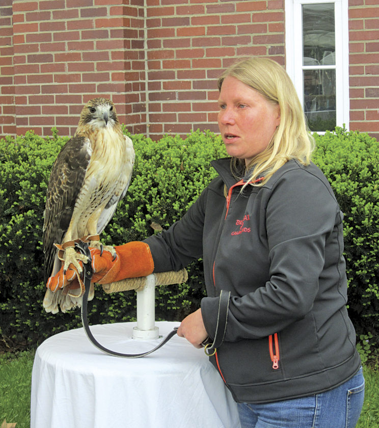 Photo by Wayne Towner Cassie Moore, a volunteer with the West Virginia Raptor Rehabilitation Center, holds a red tailed  hawk for people to see  on Saturday at the annual Marietta  Community Earth Day  Celebration.