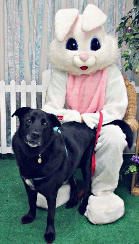 "Submitted Photo Above: Precious, a 10-year-old lab mix who was recently adopted from the Lakeshore Humane Society, poses with the Easter Bunny (Rich Carpenter) at the shelter's recent ""Picture your pet with the Easter Bunny"" fundraiser. LHS would like to thank everyone who attends events, donates items and money, and volunteers at the shelter and annual fundraisers."