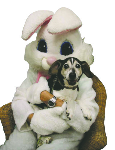 Submitted Photo: Bob poses with the Easter Bunny at Lakeshore Humane Society before heading home.
