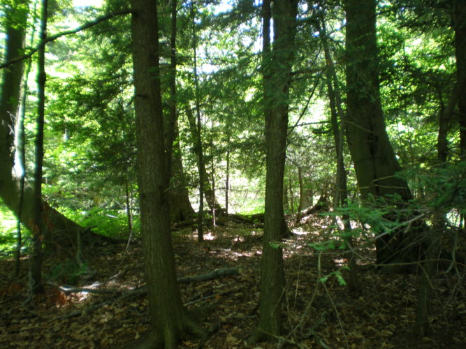 Protecting your forest with a conservation easement can ensure it will remain a forest in perpetuity. CWC photo