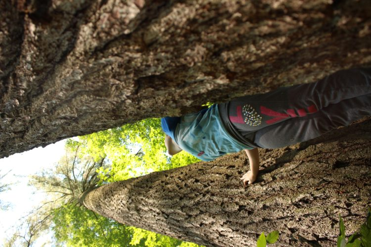 Pictured are old-growth trees by Audubon. Submitted photos