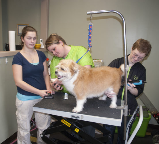 JHS junior, Amber Harrington, shadows groomers, Emily Haskins and Dakota Thompson, at Puppy Love Pet Grooming on E. 2nd Street while grooming Reagan, the dog through the CDOS Program at JHS. She is interested in working with animals after graduation and the staff at Puppy Love is showing her how an animal business is run including learning about customer service.