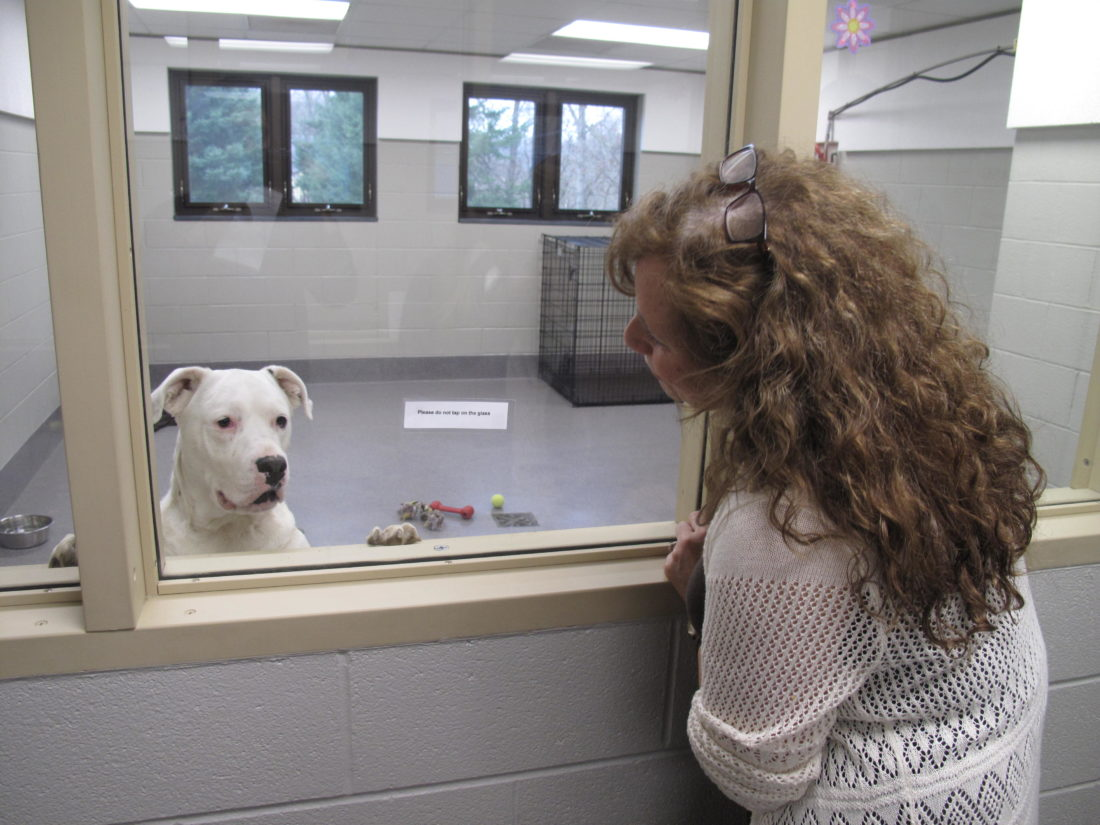 Pictured is local resident Tina Jones admiring Snowflake, a 3-year-old Bulldog, American/Mix, during a meet and greet event on Tuesday at the Chautauqua County Humane Society's Adoption Center on Strunk Road. P-J photo by A.J. Rao