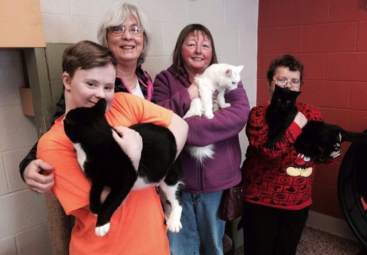 From left, Nancy Smith, Janet Laurin, Michelle Lutgen and Sherry Lewis interact with some feline friends at the Humane Society.