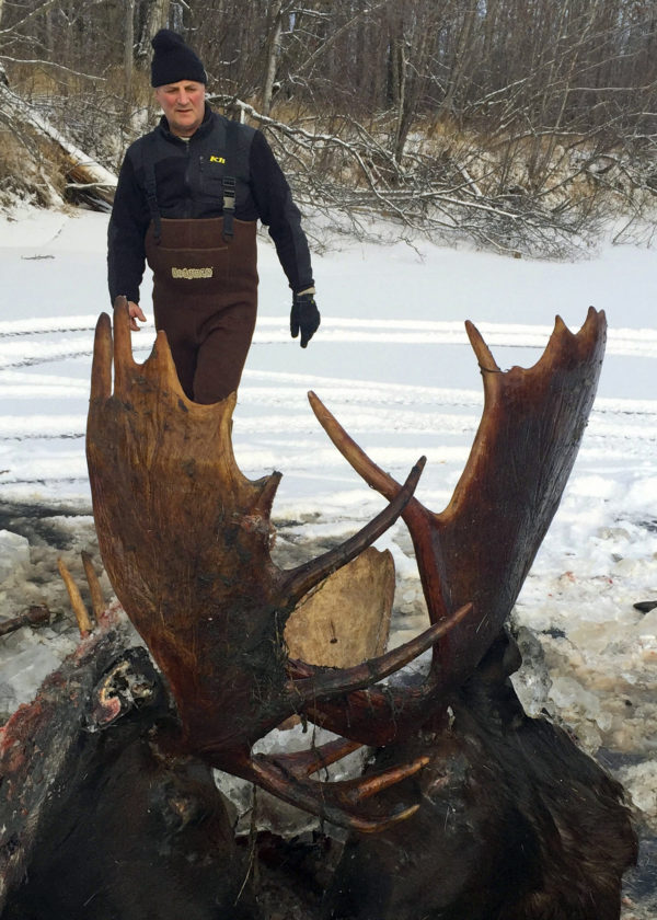 ASSOCIATED PRESS This Nov. 12 photo, provided by Jeff Erickson, shows two moose frozen mid-fight and encased in ice near the remote village of Unalakleet, Alaska, on the state's western coast.