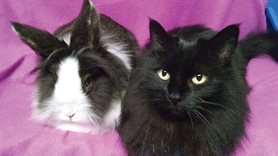 Katy the bunny, left, and Shelley the cat are both pretty laid-back and quite photogenic.