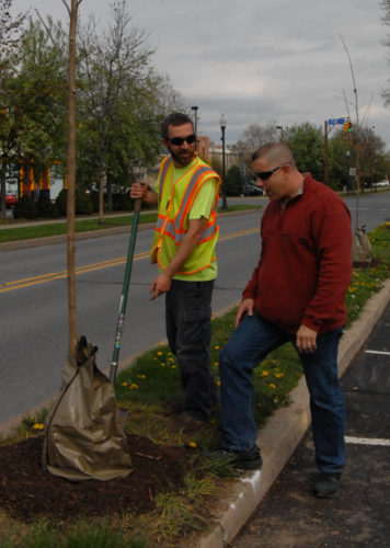 CARA MORNINGSTAR/Sun-Gazette Chad Eckert, city forester, left and Tom Cillo, general manager of streets and parks, right, plant a tree along Little League Boulevard near the intersection with Pine Street in Williamsport on Thursday.