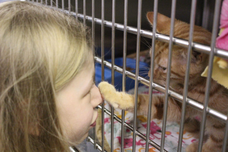 Photos ProvidedStudent Brooke Varner interacts with cats during some down time at her temporary job at the Marshall County Animal Shelter.