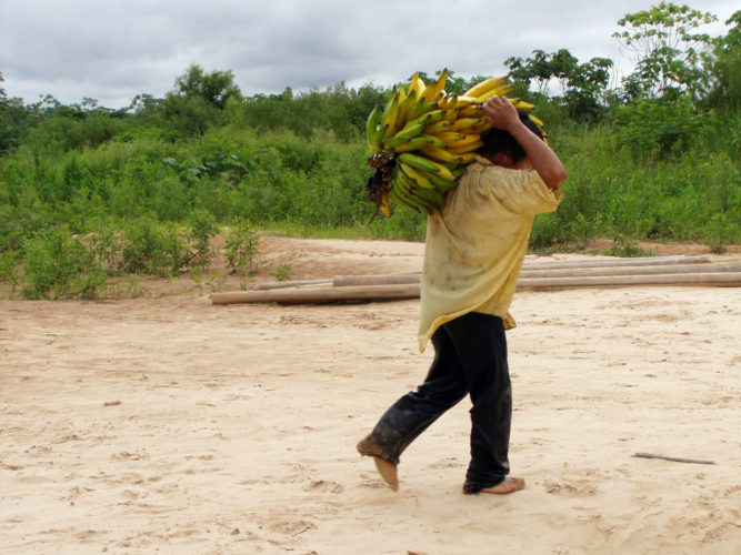 A Tsimane man carries bananas. He is among a group of indigenous people with a traditional lifestyle deep in the Bolivian Amazon, that, according to a new study released Friday,  has some of the healthiest hearts on the planet. Scientists say the new findings underline the significance of lowering the traditional risk factors for heart disease, and like the Tsimane people, we should be physically active and have a low-fat, low-sugar diet.